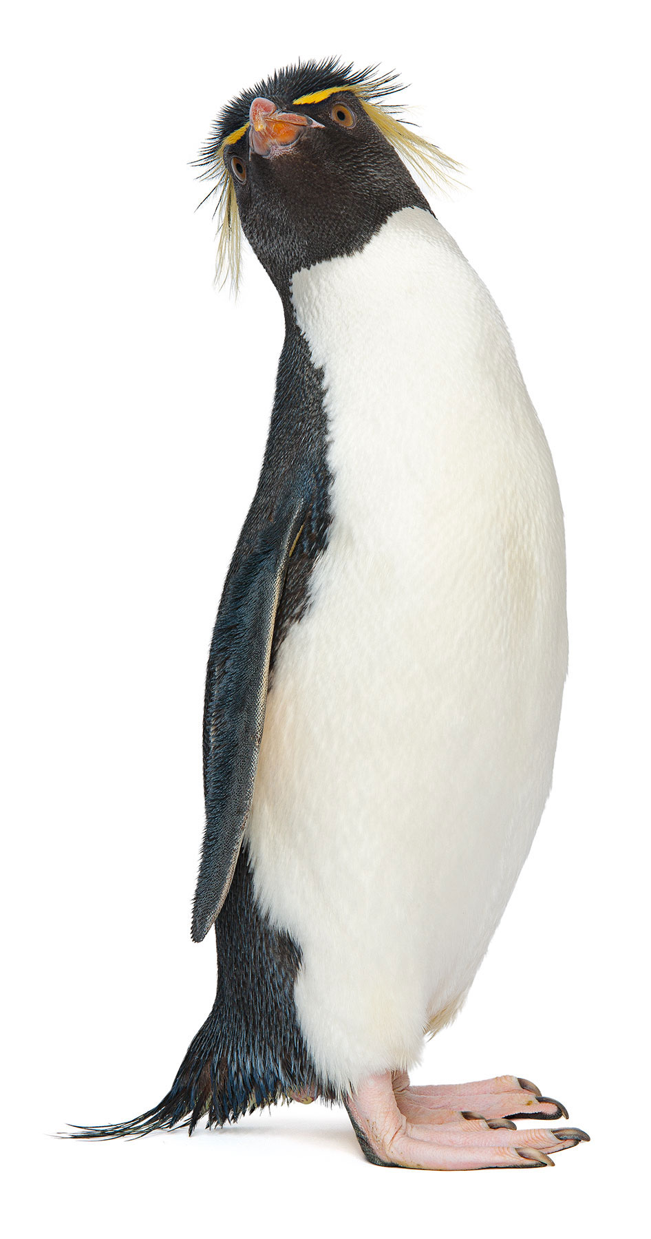 Pro Bono campaign with  Mullen Advertising  for the  New England Aquarium's  penguin extravaganza. Check out the   BLOG   for some interesting tidbits and video, _________________________________________________________