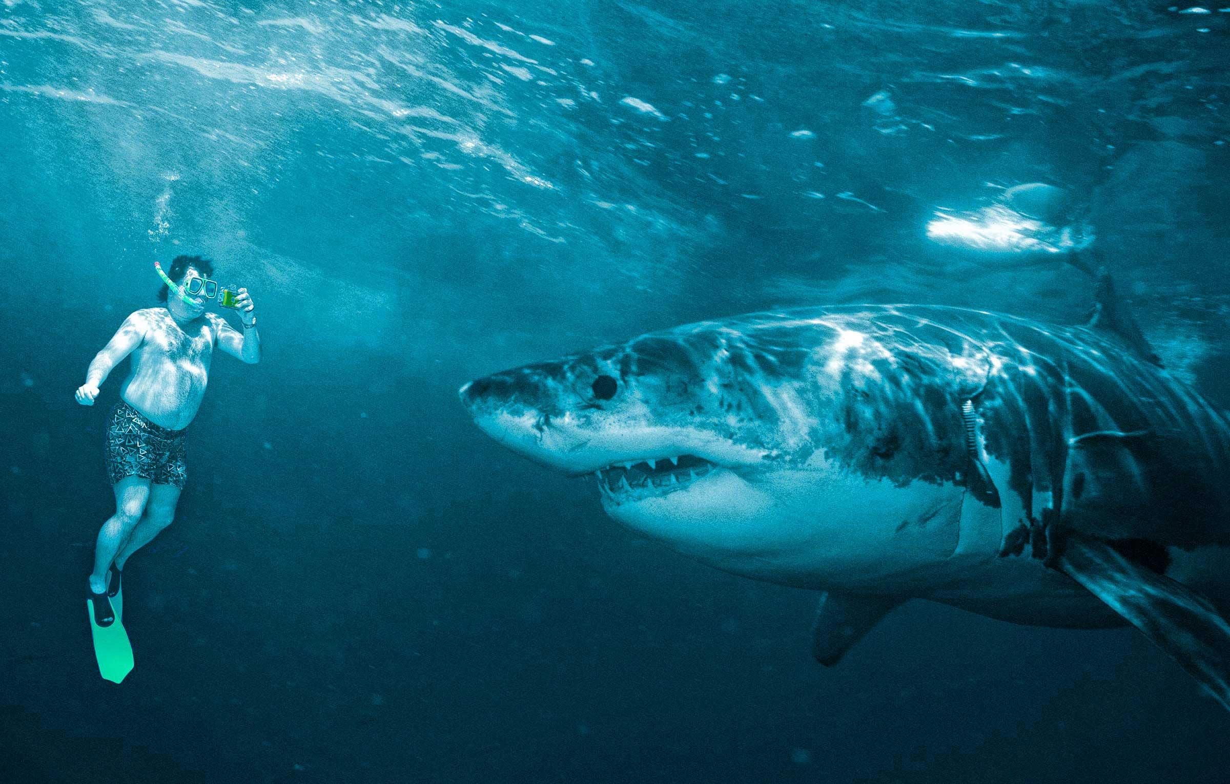 tourist-great-white-shark.jpg