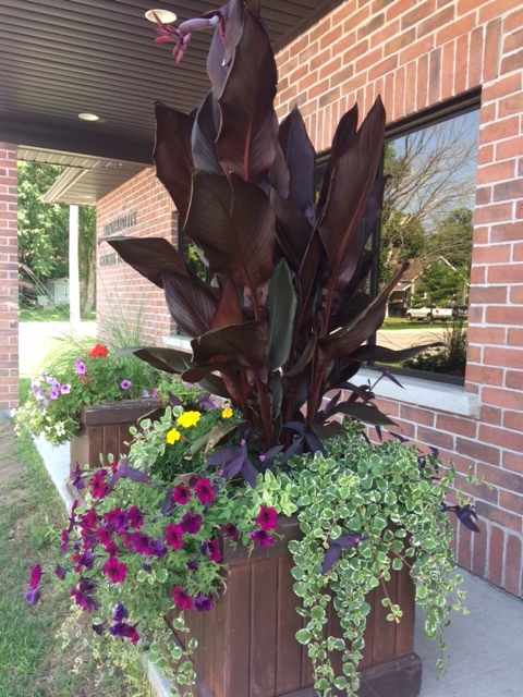 School planters.JPG