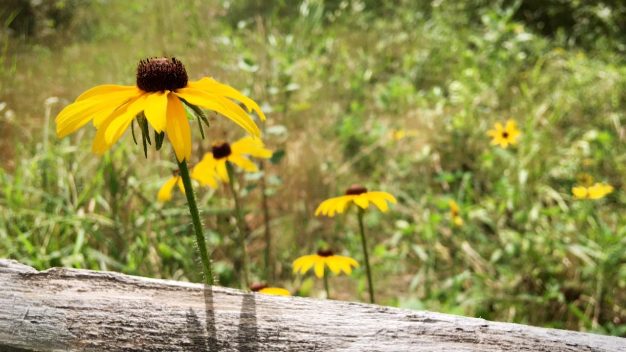 Wildflowers trail.JPG