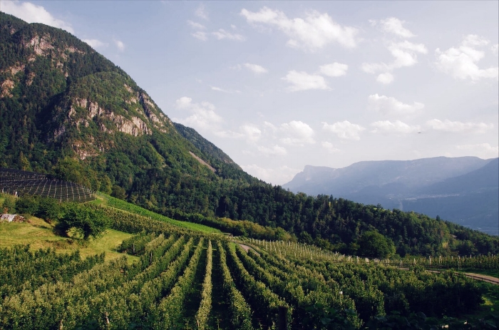 South Tyrol / Sud Tirol:  where apple orchards meet vineyards
