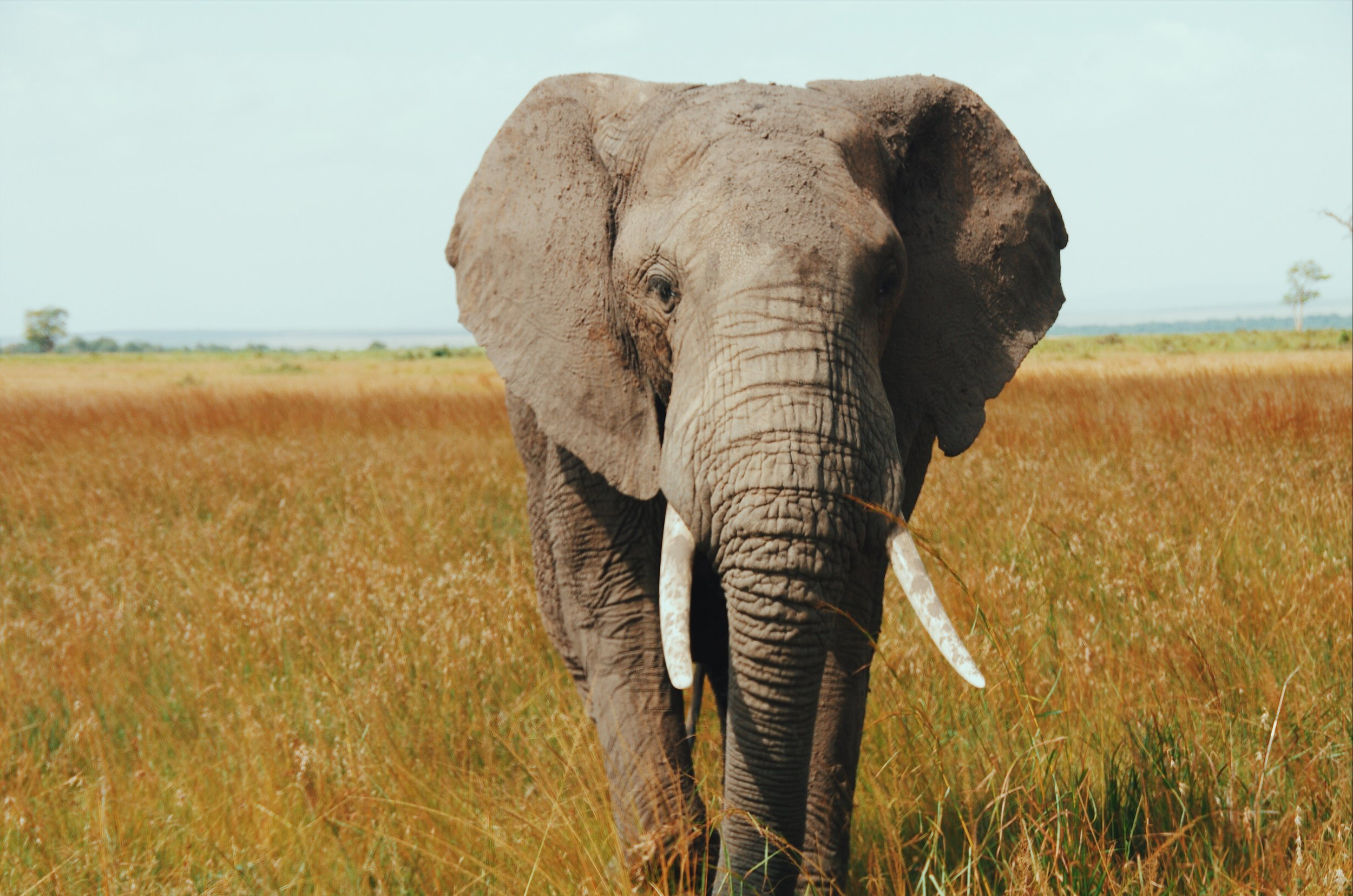 angama mara kenya safari game drive elephant