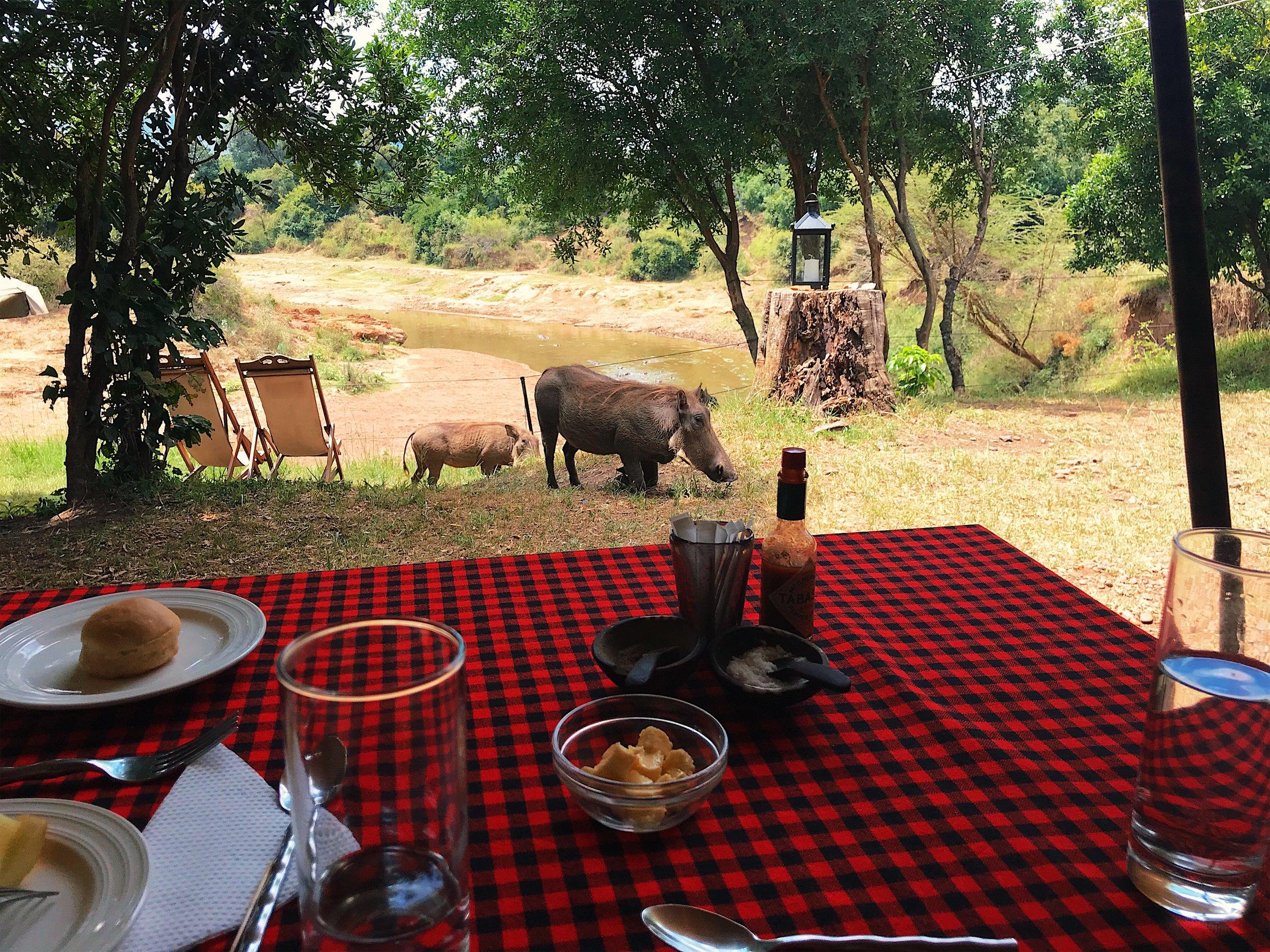 sentinel mara masai mara