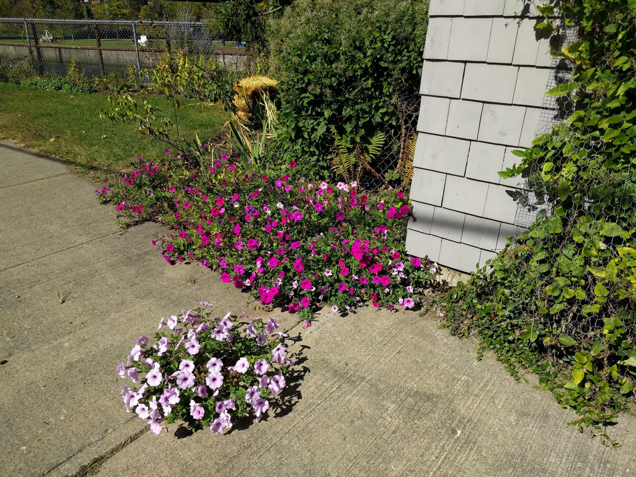 Flowers on the Sidewalks