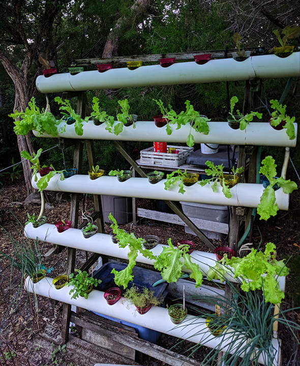 One of the hydroponic gardens.