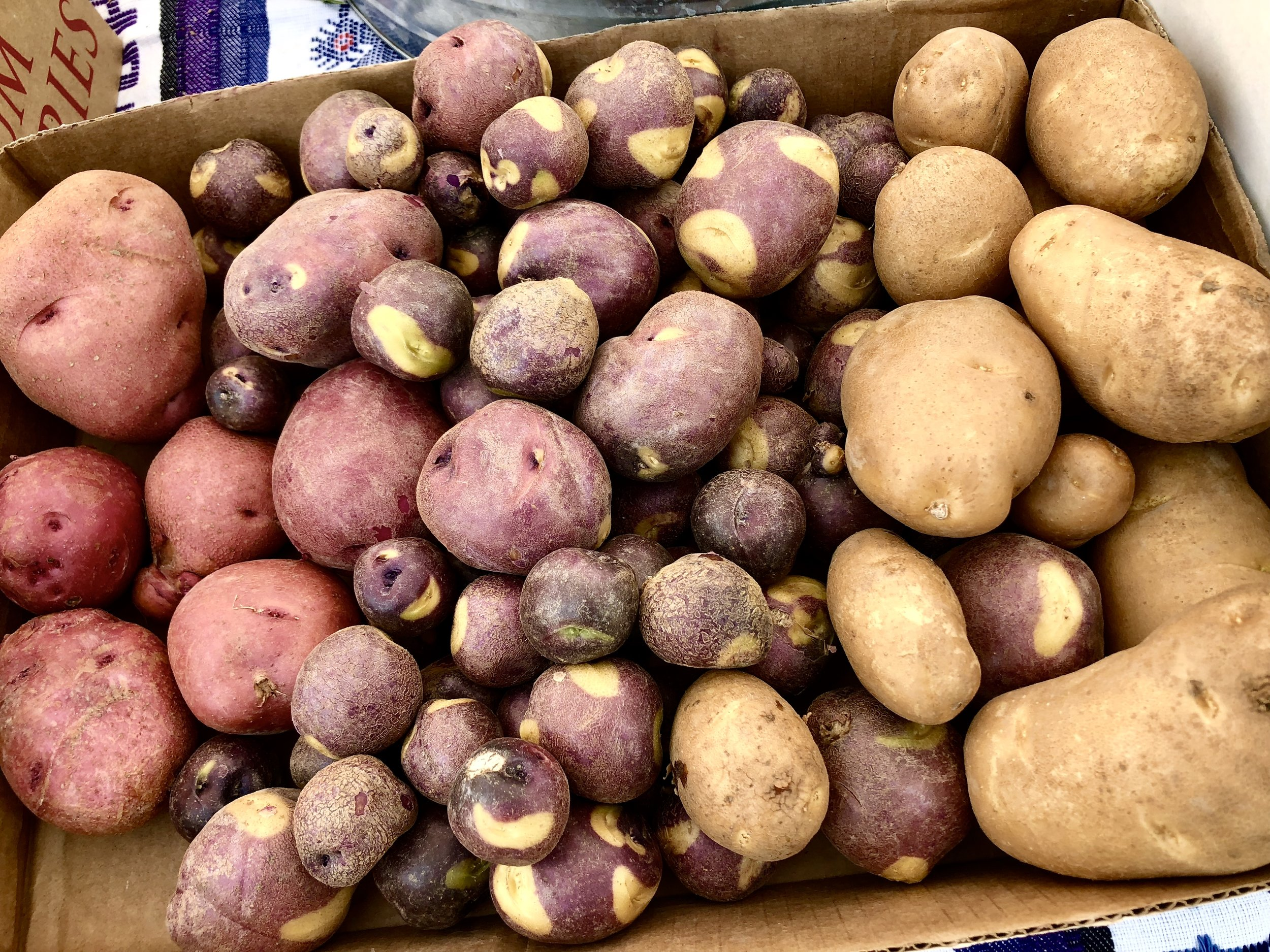 Fingerling potatoes! They're so pretty.