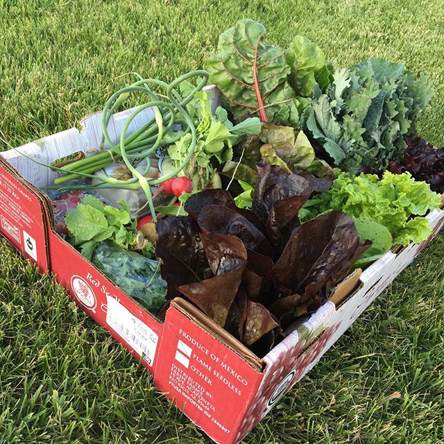 People near Blackfoot, I wanted to make sure you knew we have a pick up location in Blackfoot. Every Thursday evening at 5 pm we'll have the boxes ready for you in the Snake River Junior High parking lot! This starts next Thursday 6/6, you still have time to sign up. Go to katsfamfarm.com to sign up now! #katsfamfarm