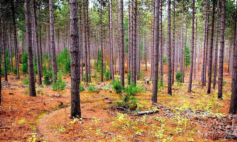 Ganaraska Forest
