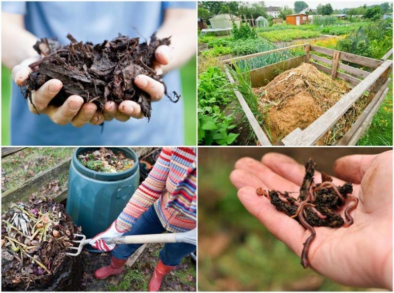 composting-1011.jpg