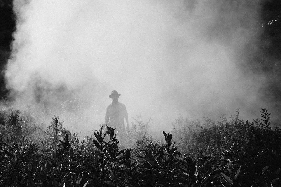 fog-918976_960_720.jpg