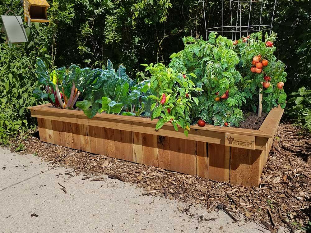 Trailside-Garden+big-veggies-no-type-1000px.jpg