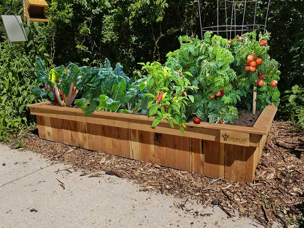 Why Raised Beds Are Best Deep Roots Project