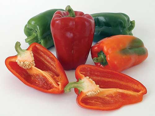 Seedling2-ace-pepper.jpg