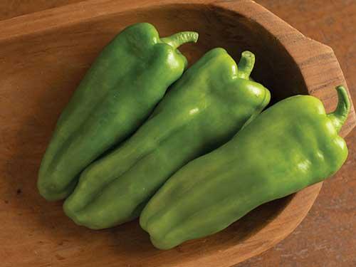 Seedling17-nassau-peppers.jpg