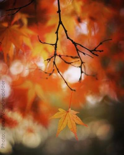 single_leaf.jpg
