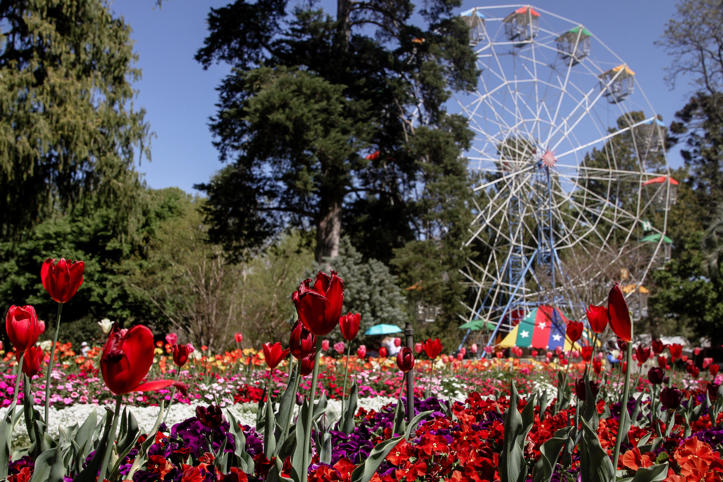 Toowoomba Weekend Carnival of Flowers What's On