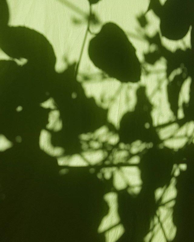 Easing with shadows #madeinbrisvegas
