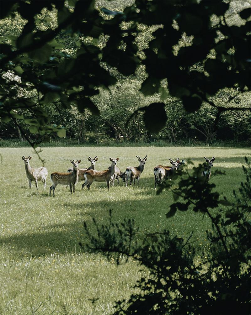 Theseptemberchronicles_dorset_deer.jpg