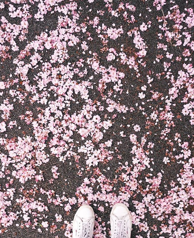 We may be on the opposite side of cherry blossom season in London, but I've got an exciting collaboration coming up and this petal confetti is a little clue! 🌸