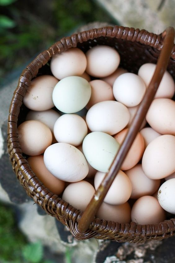 Ella's Farm Eggs - At Ella's Farm, we are committed to taking care of our animals and Mother Earth with mindfulness, kindness and much love.We promise:* no hormones* no antibiotics* no steroids * no stress* no chemical residues* no growth hormones* no synthetic methionine