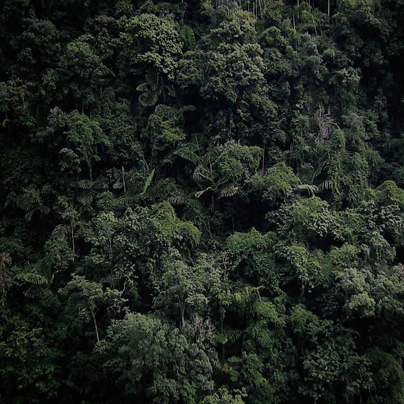 #margoterrante_wa_jungle.jpg