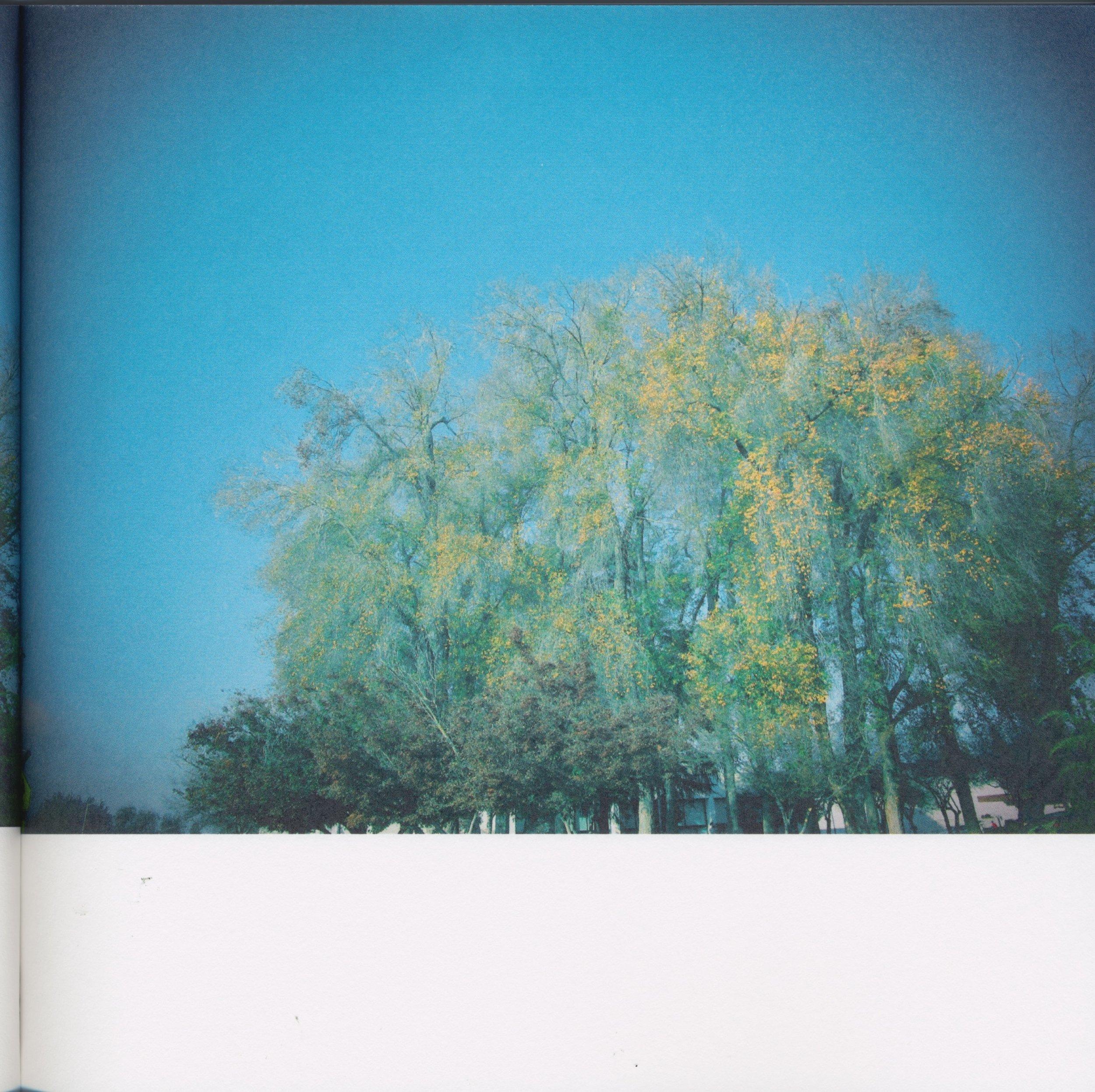 BeautifulTreesofFresno2019-11.jpeg
