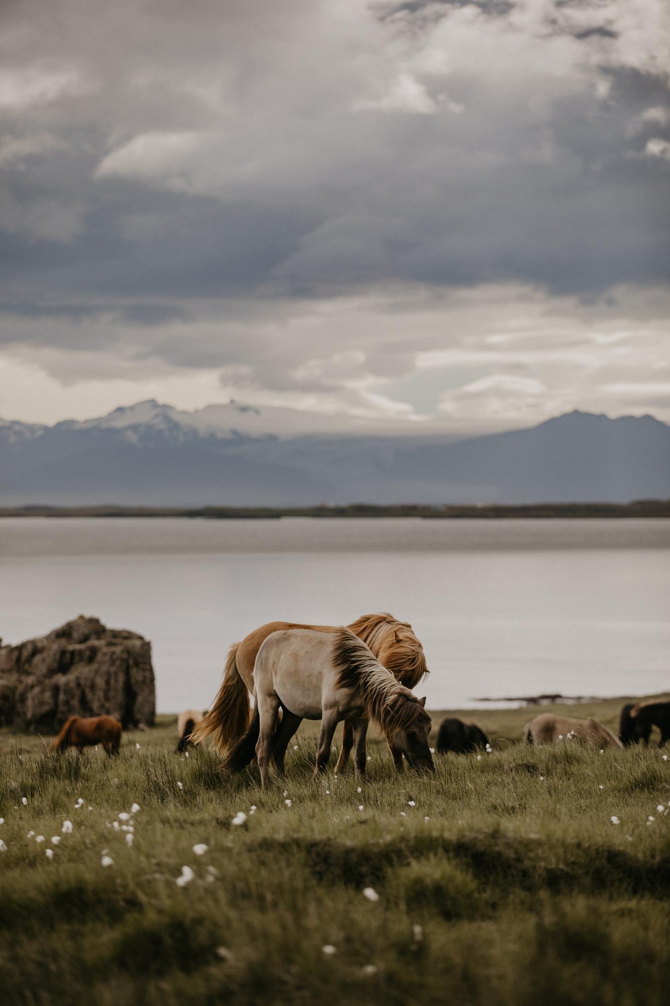 Iceland engagement elopement photographer road trip vestrahorn