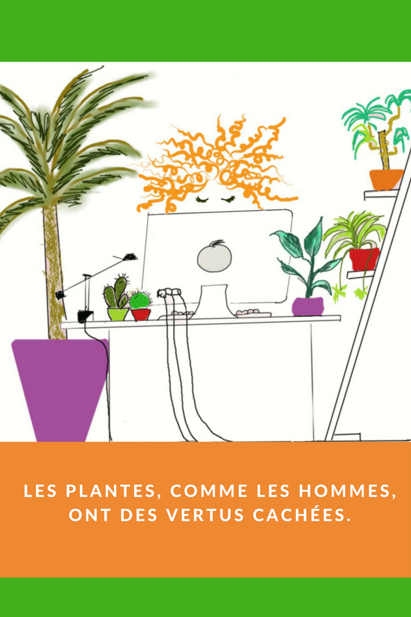 plantes (2).png