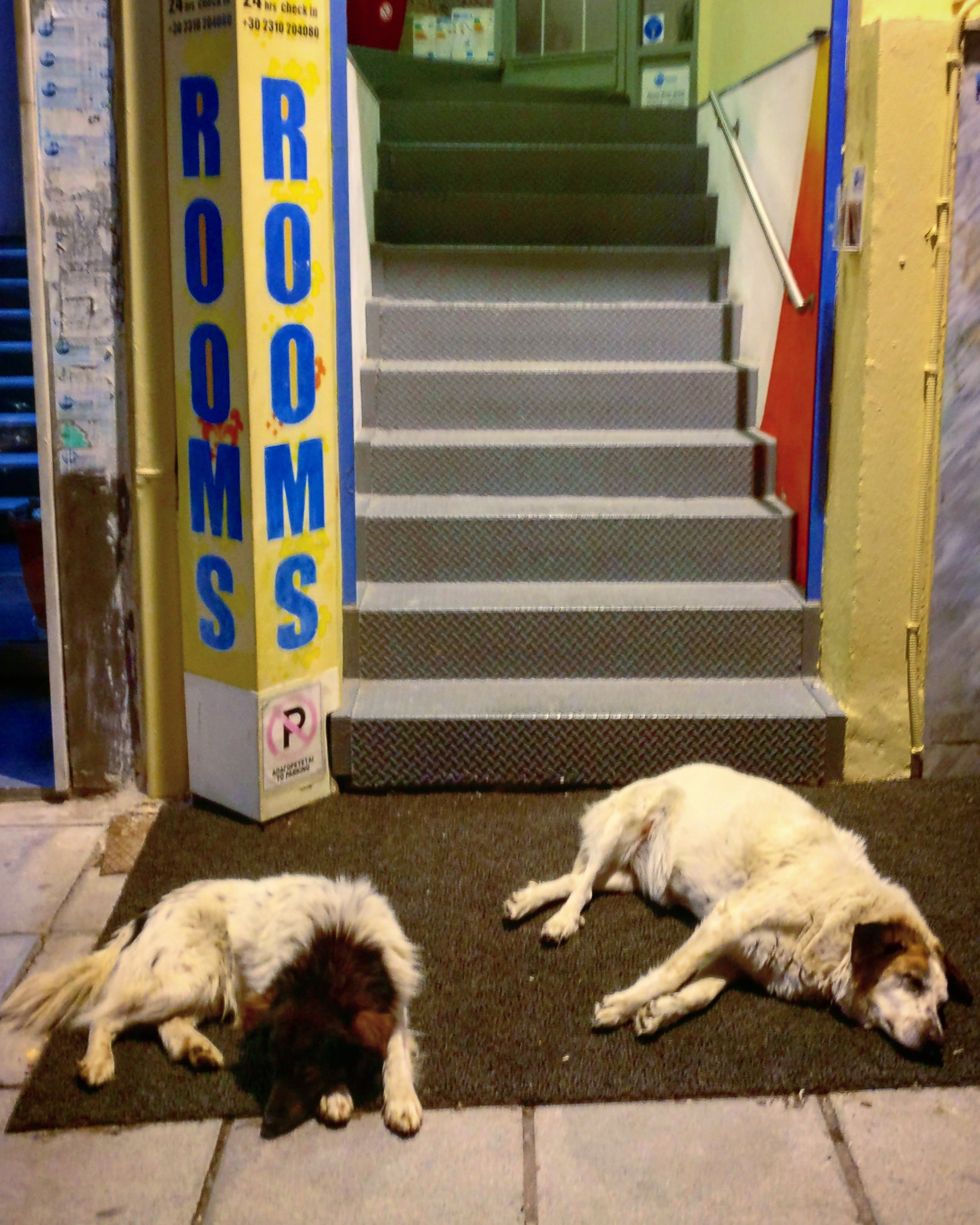 Savage beasts guarding the hostel entrance