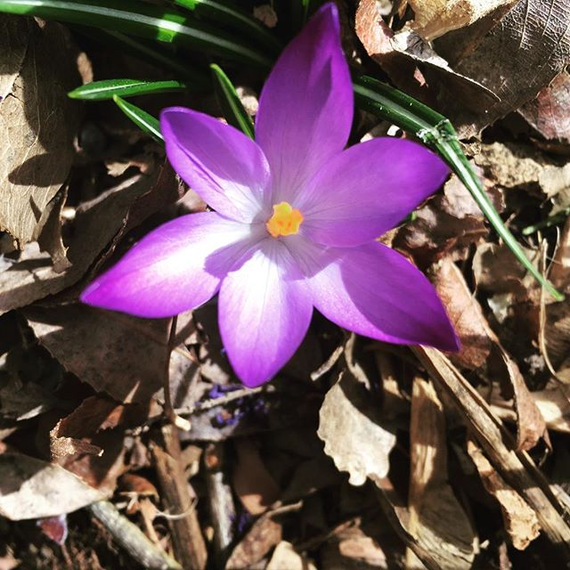 Welcome Early Spring!! ;)