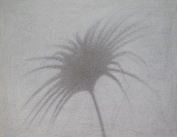 Untitled, 1985. Palmetto Series. Charcoal on rag paper.