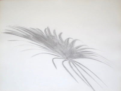 Untitled, 1985. Palmetto Series. Charcoal on rag paper. 20 x 30""