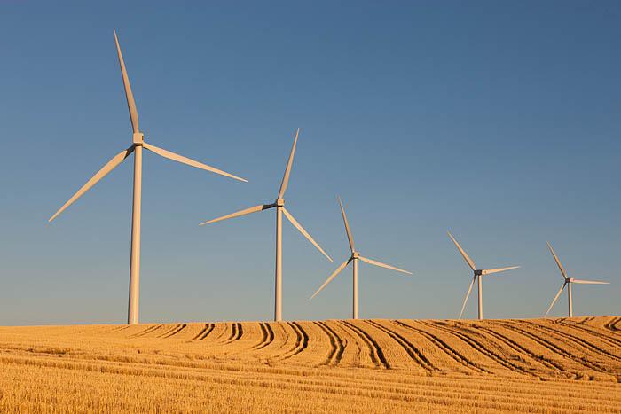 Five-turbines-in-harvested-field-0467D.jpg