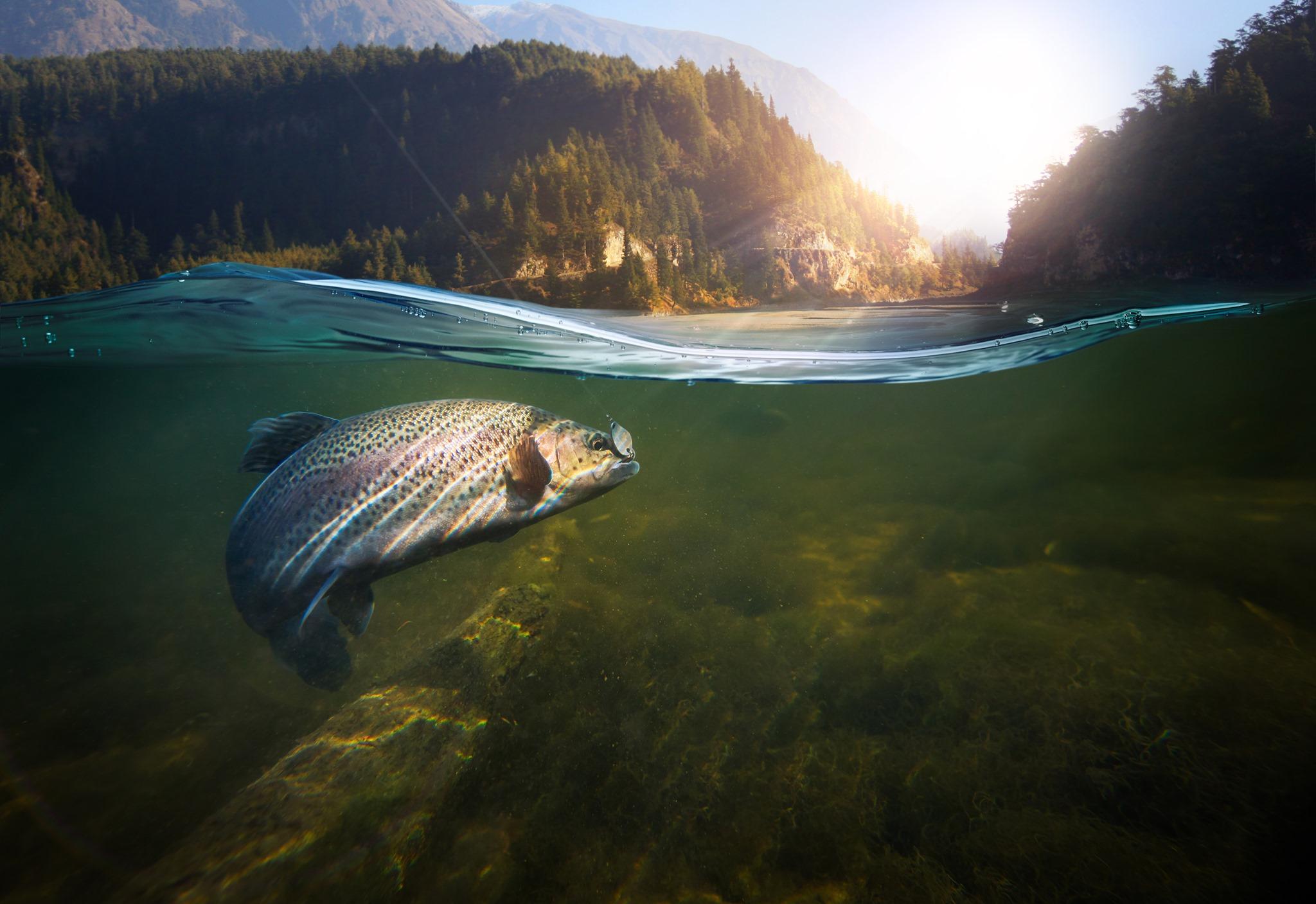 Gone Fishin Blue Mountain Land Trust.jpg
