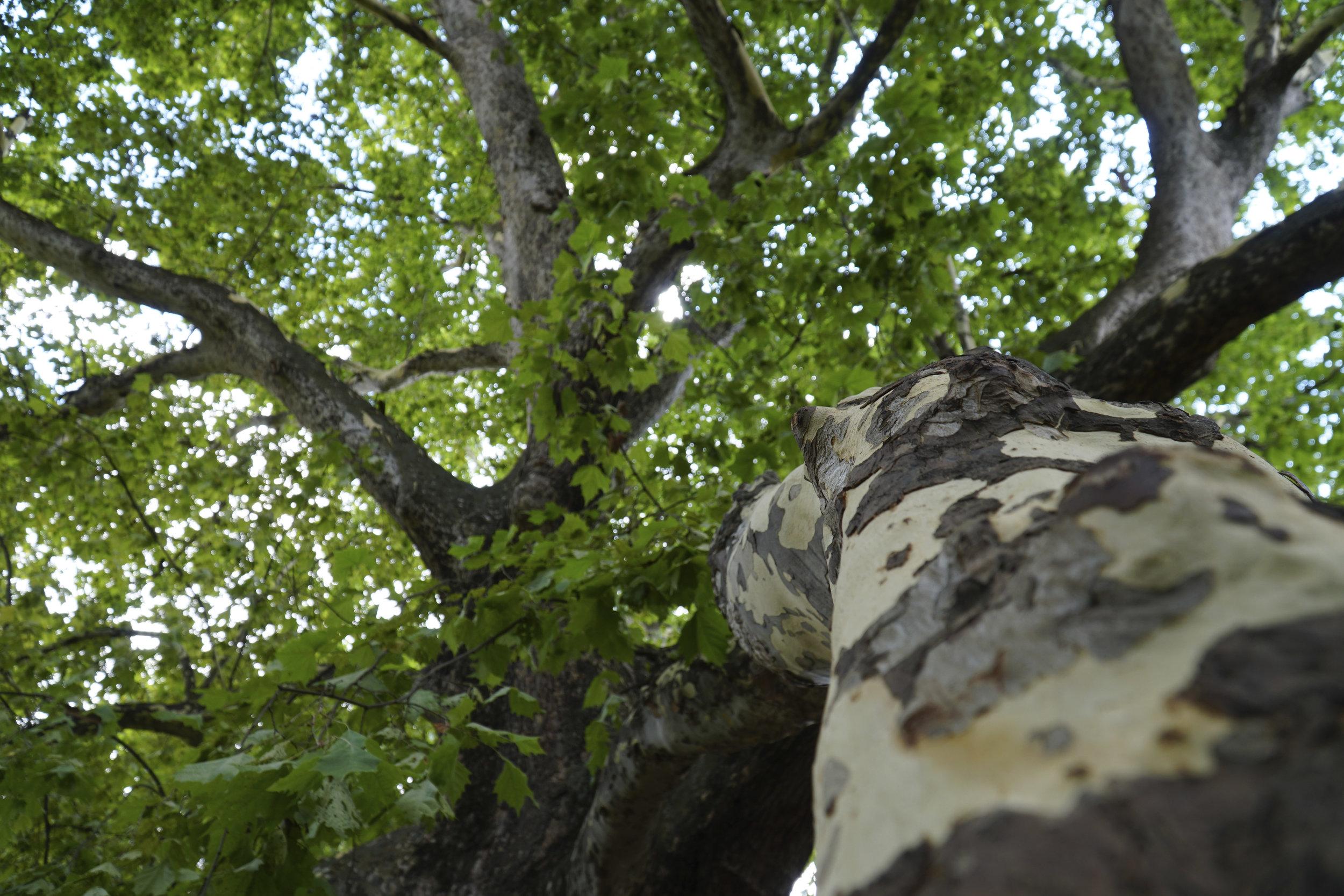 island tree 2.jpg