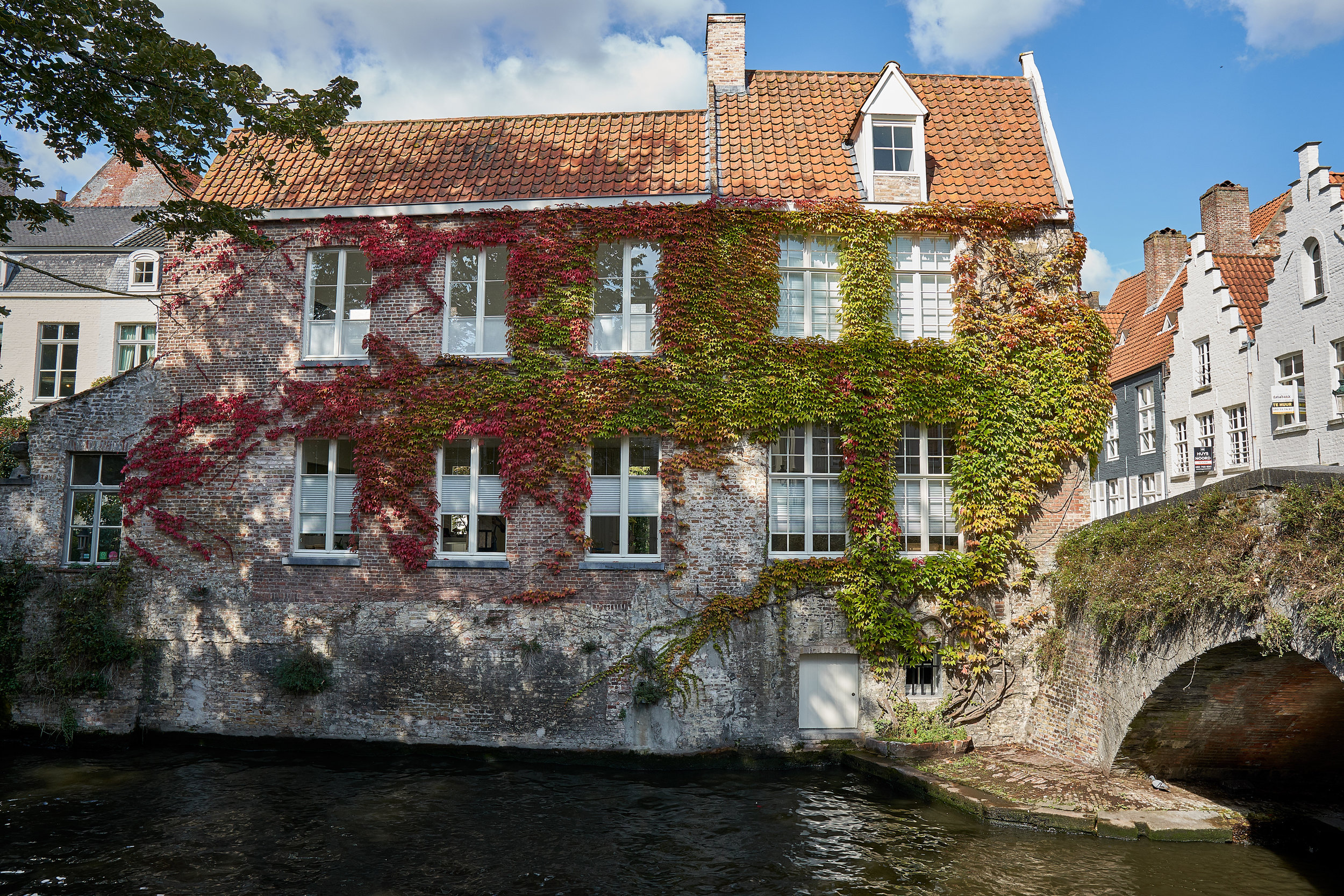 vines on house by canal.jpg