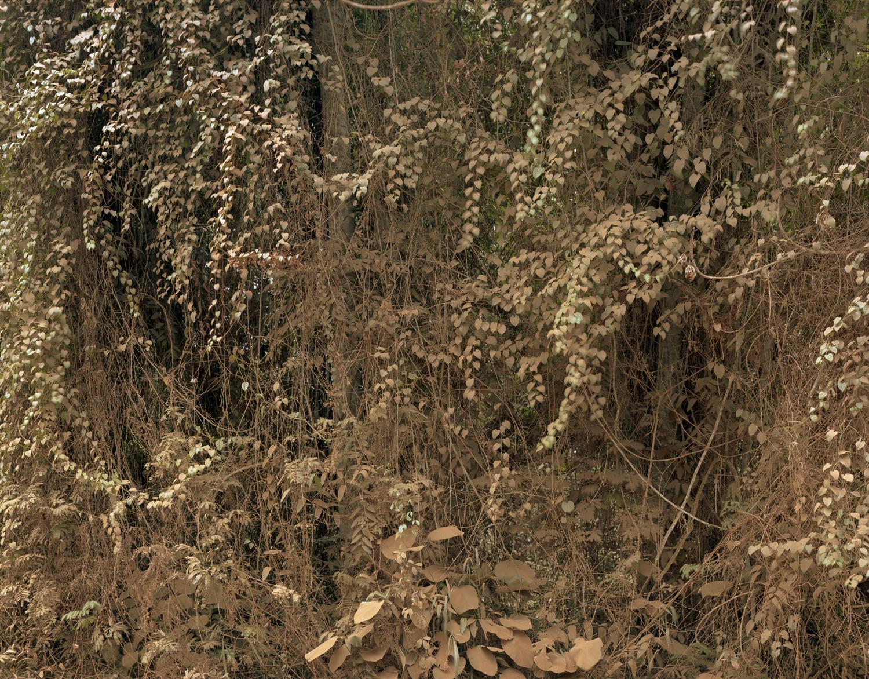"""""""Dust #81001"""" Archival Pigment Print"""