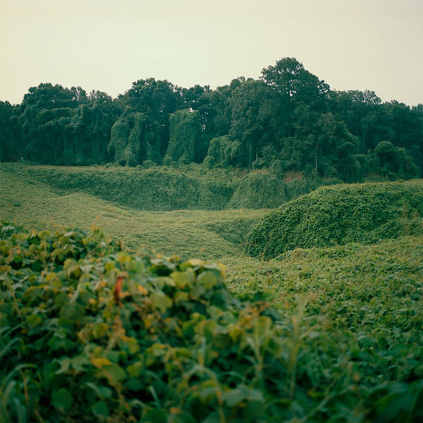 """Kudzu at Night"" Pigment Print Photography, 15""x 15"""