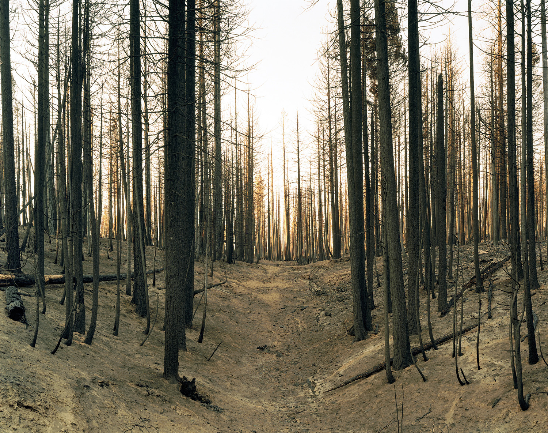 Wildfire #5, Moonlight Fire, Plumas National Forest, CA 2007