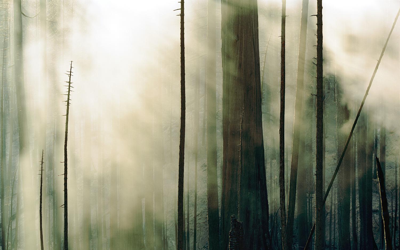 Wildfire #3 Moonlight Fire, Plumas National Forest, CA_2007.jpg