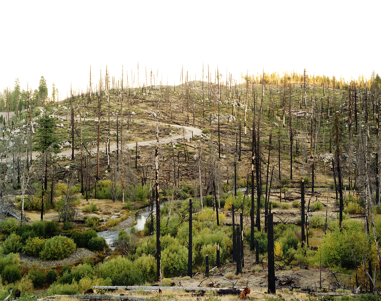 Wildfire #79, Antelope Fire, Antelope Lake, CA, 2007