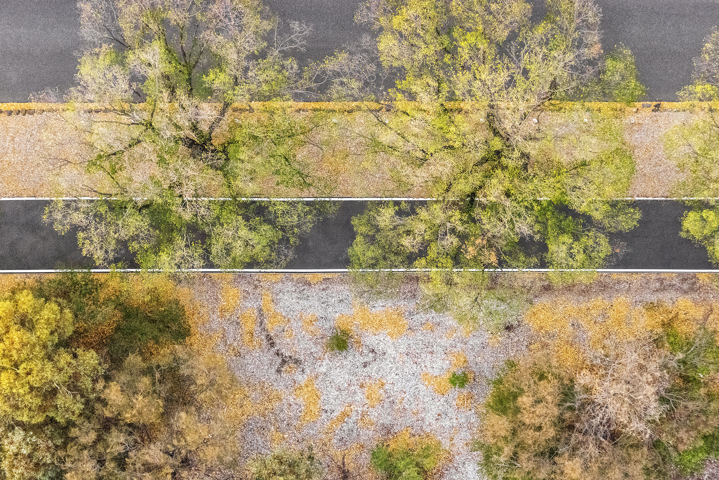 "Zoe Wetherall, ""Autumn Trees"" (archival pigment print) limited edition color photograph"