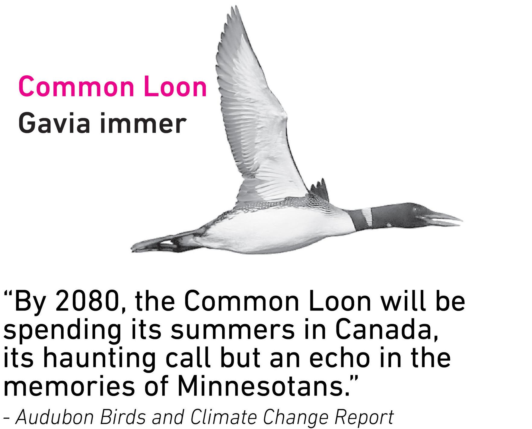 Common Loon.jpg