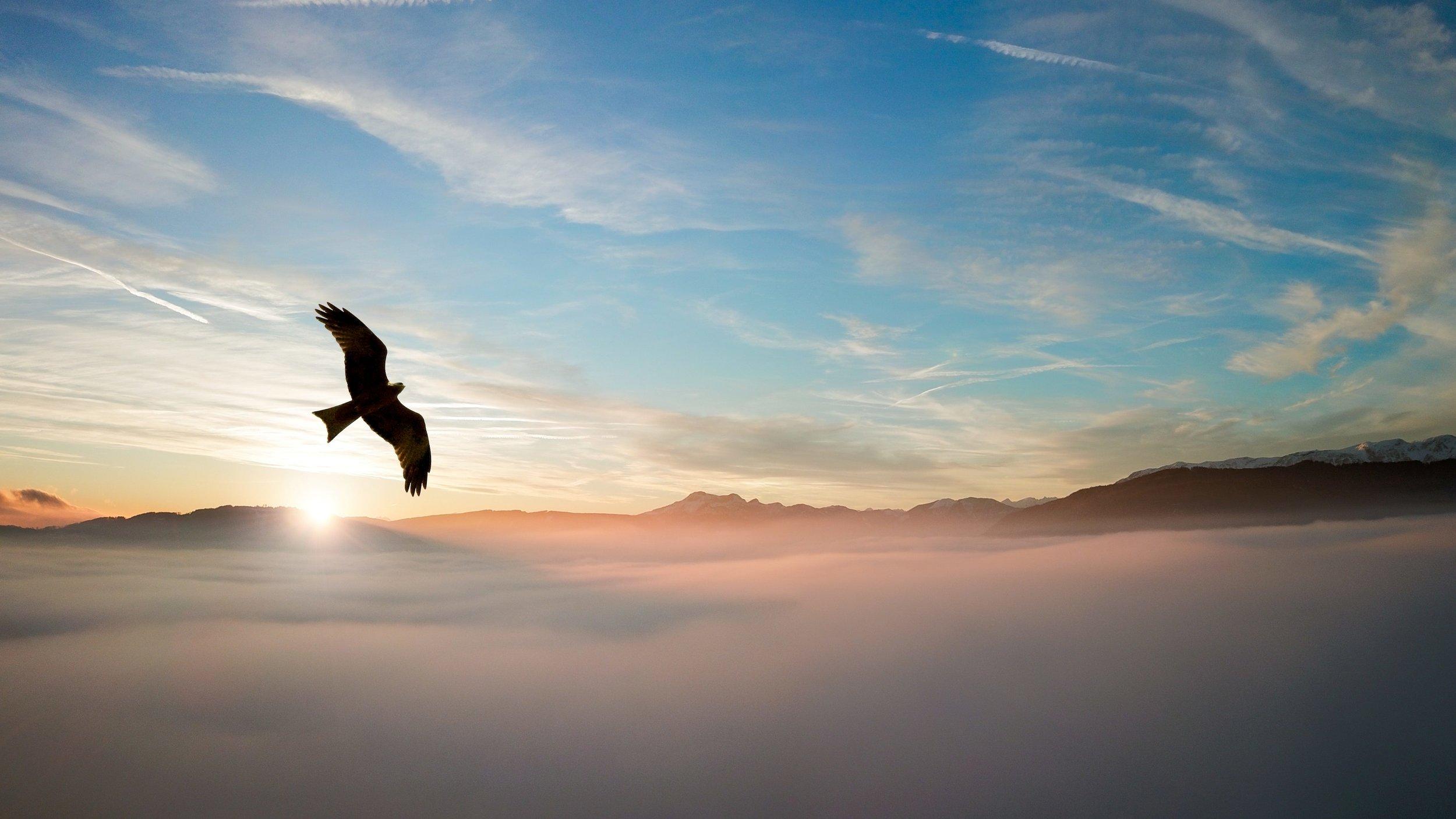 backlit-bird-clouds-755385.jpg
