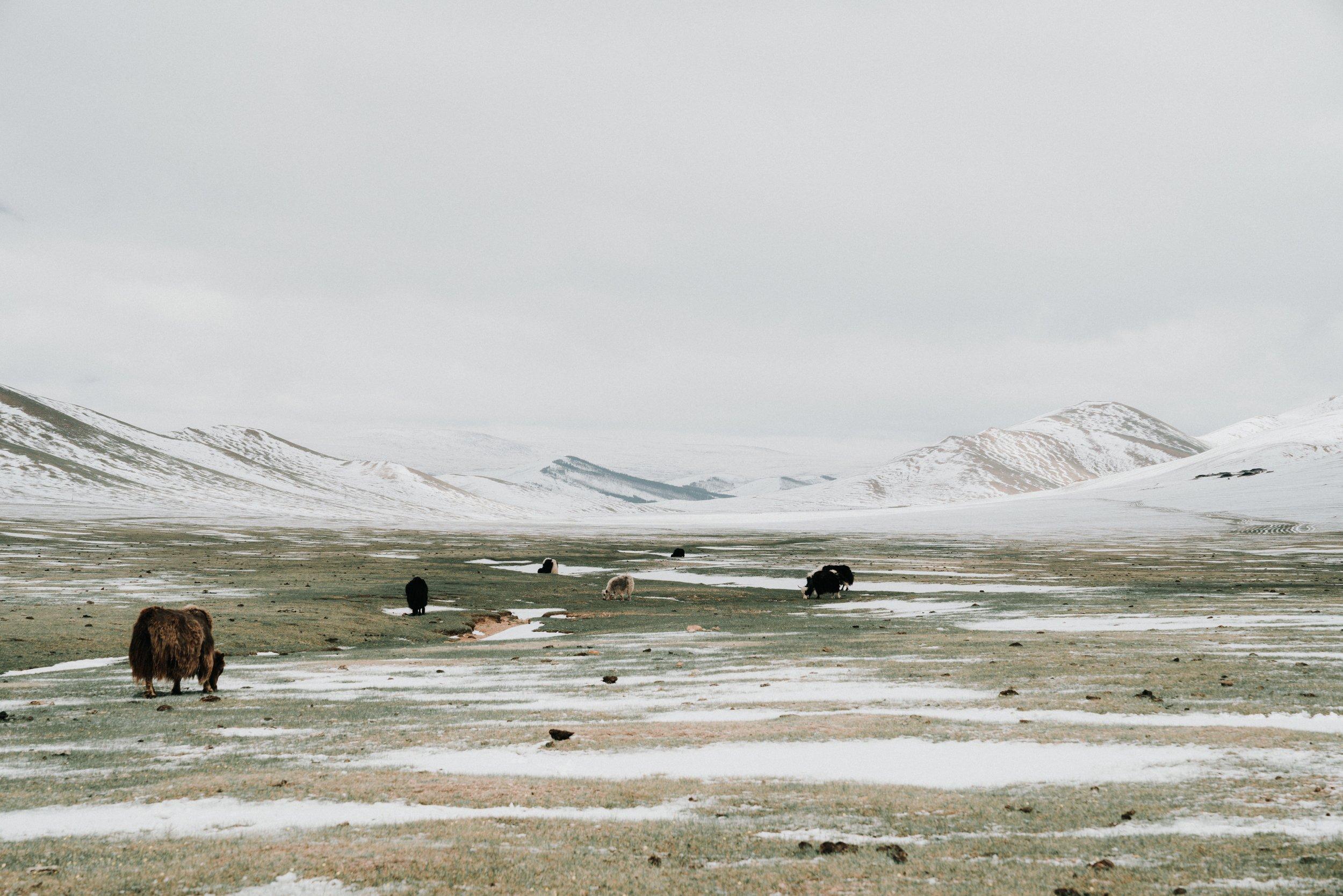 Mongolia_2018 (333 of 403) copy.jpg