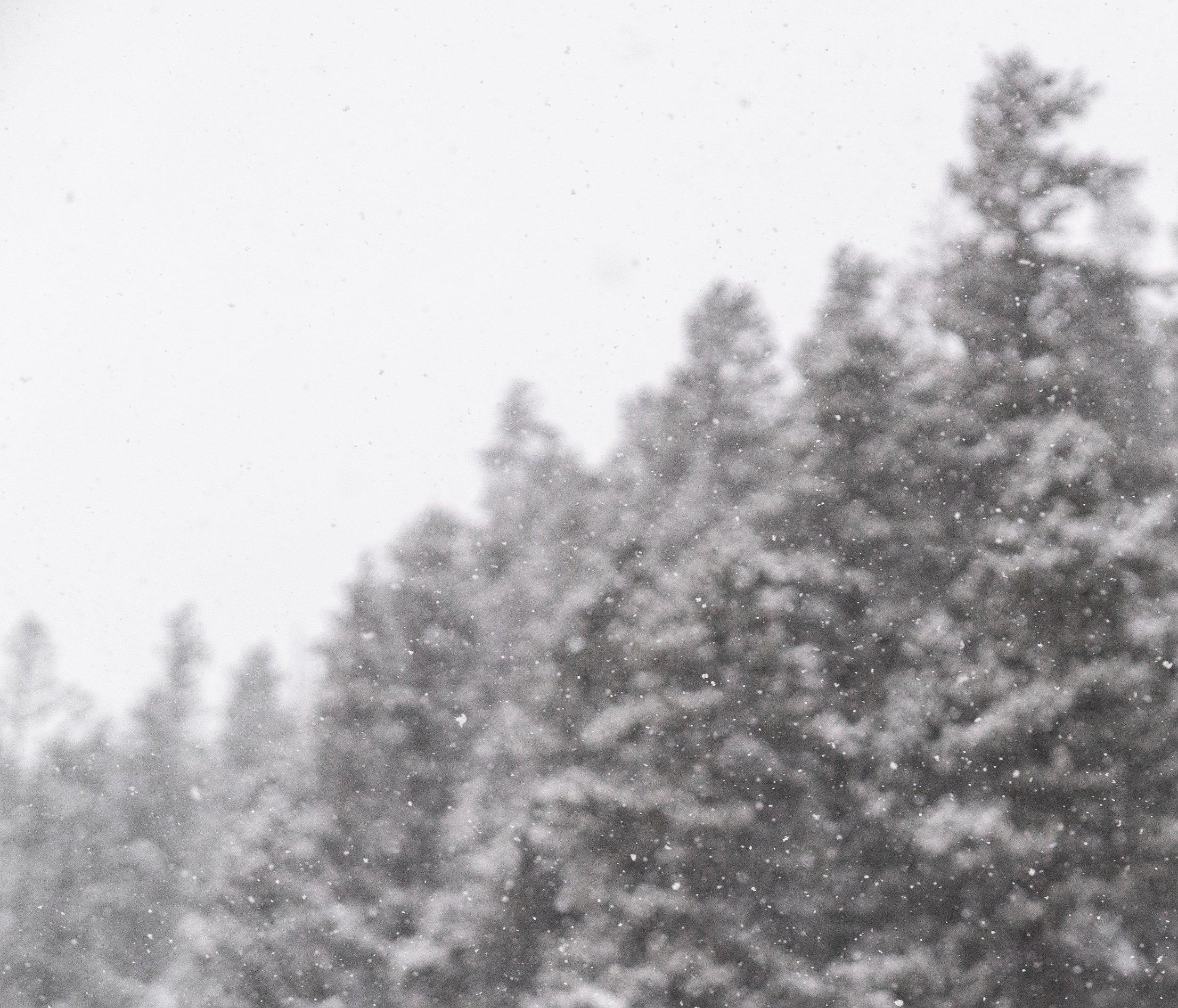 Winter_1 copy.jpg