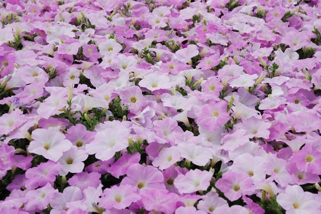 Wave Misty Lilac.jpg
