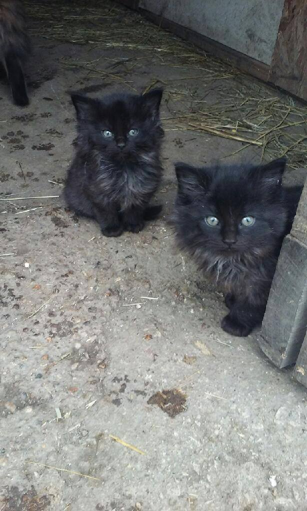 Always cats & kittens to meet you in the barn.