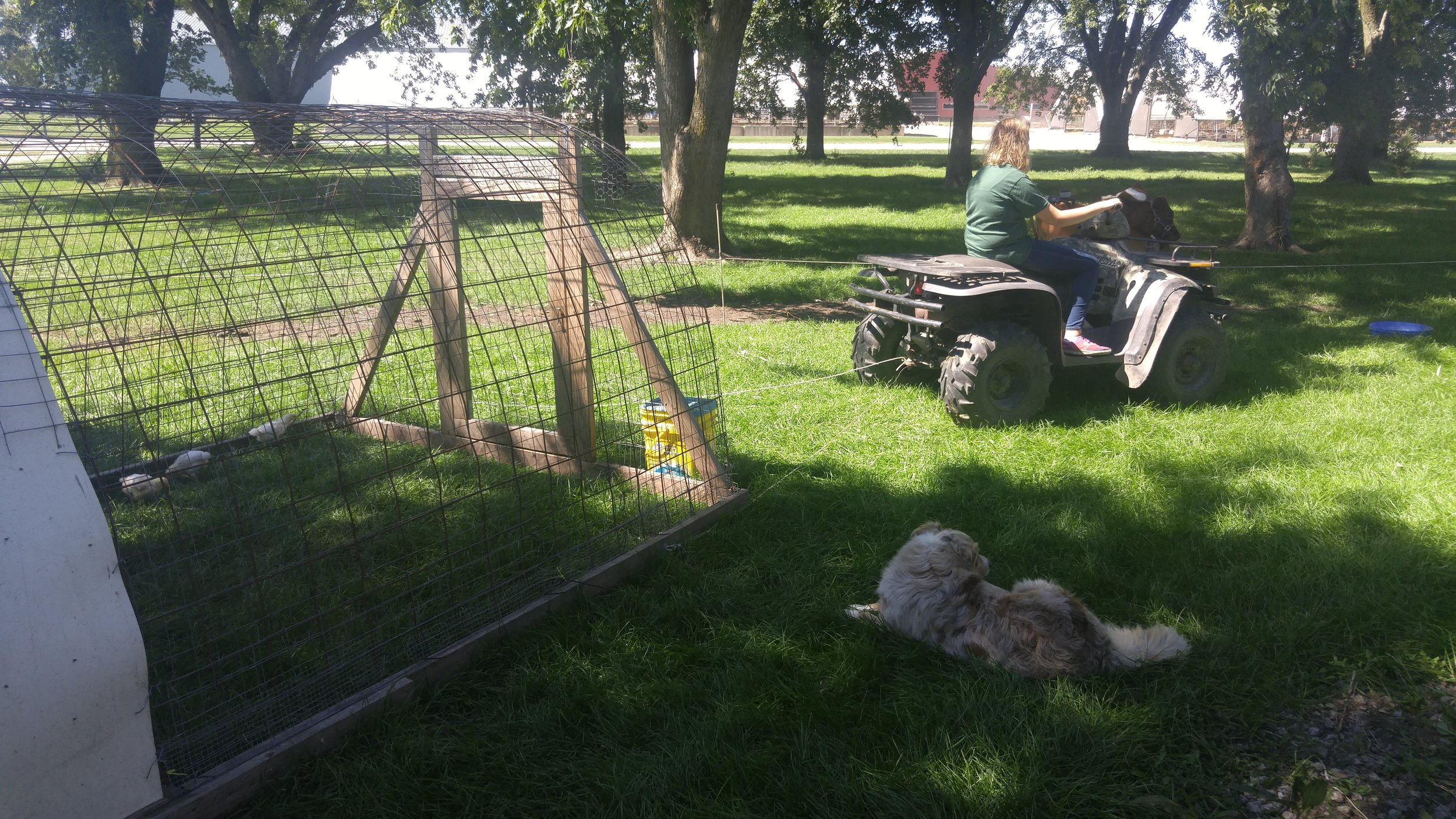 Penny's making sure K~ is moving the chickens in an appropriate manner. AKA slacking on the job..