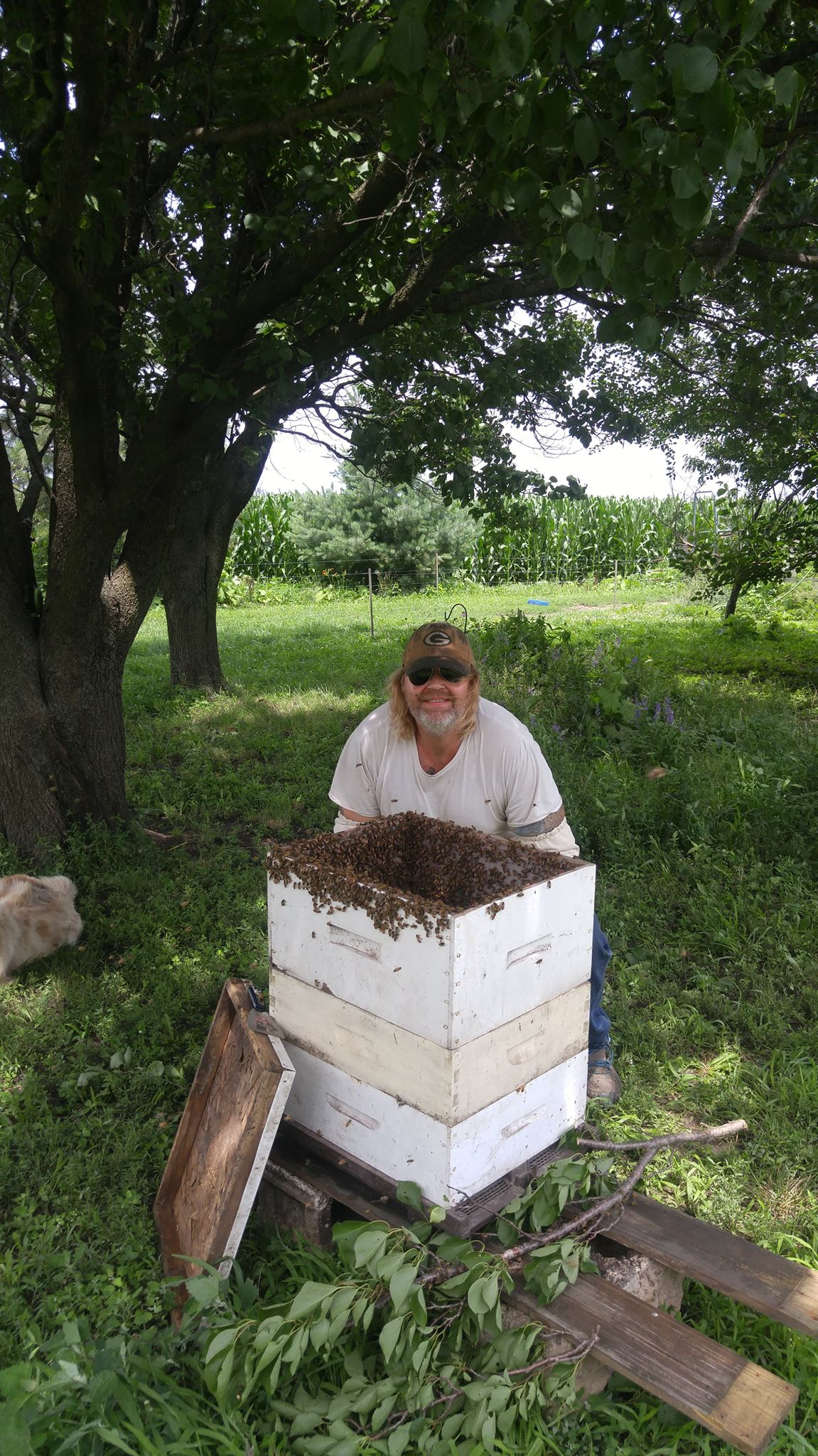 scott with bees in hive.jpg